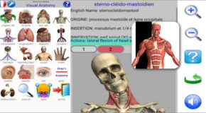 Visual Anatomy 2 build 40